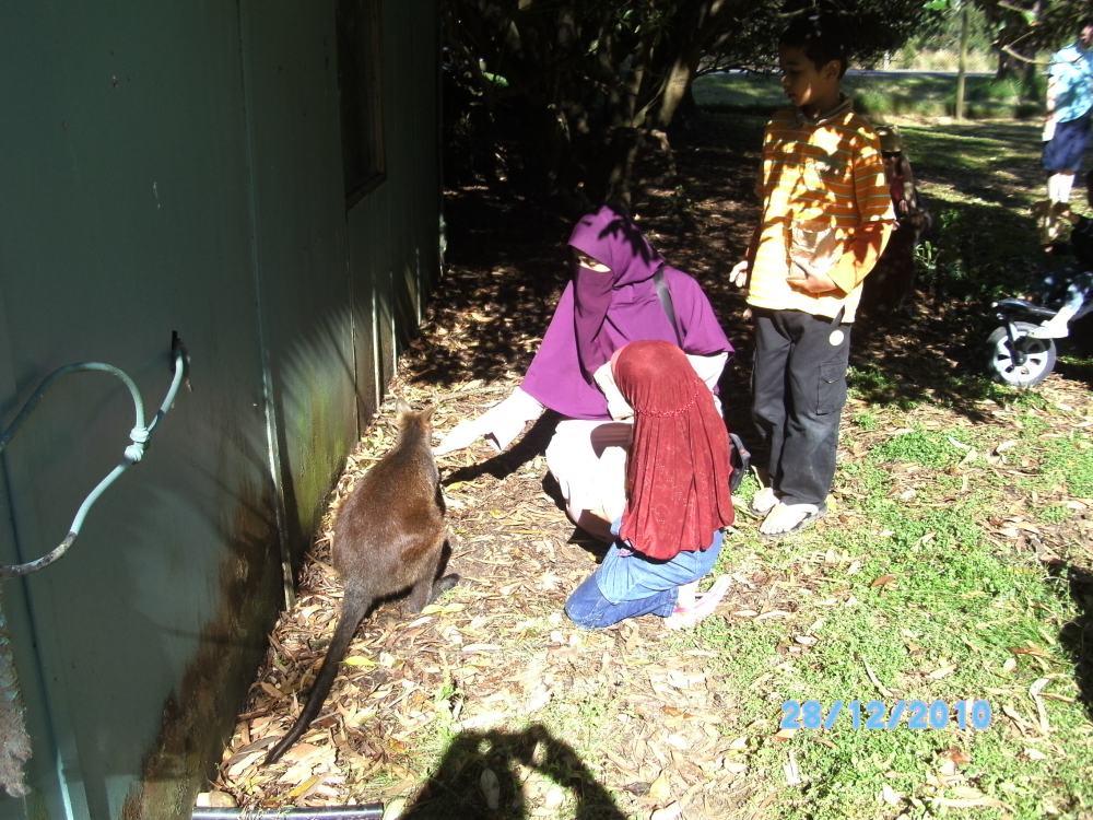 Beri makan kangaroo di Phillip Island